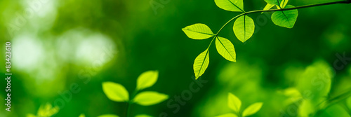 Green Leaves - 83423610