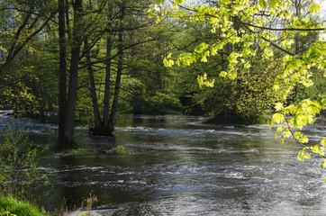 Riverside springtime