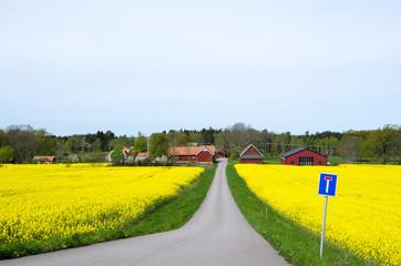 Swedish spring landscape