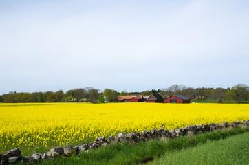 Swedish rural landscape