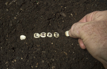 Planting The Seed Of Life