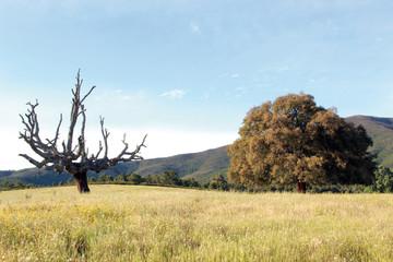Alcornoque y tronco, Hernán Pérez, España