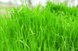 Green grass outdoors