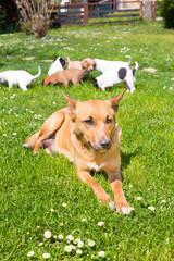 Mixed-breed cute little dog family.