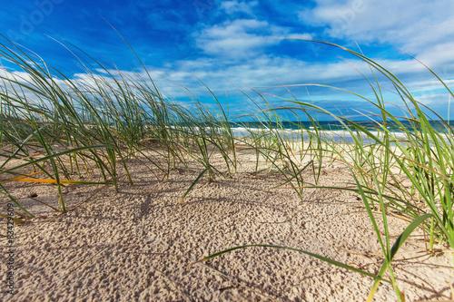 Sunny beach with sand dunes, grass and blue sky, Australia