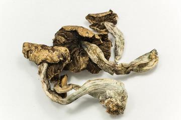 Magic Mushrooms 2