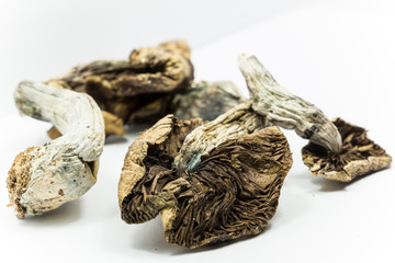 Magic Mushrooms 3