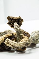 Magic Mushrooms 4