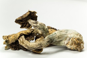 Magic Mushrooms 6