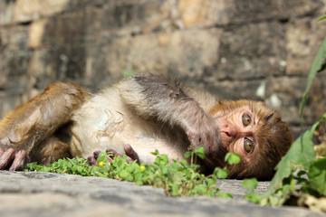 Мартышка в Катманду