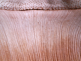 Patterned surface of the bark.