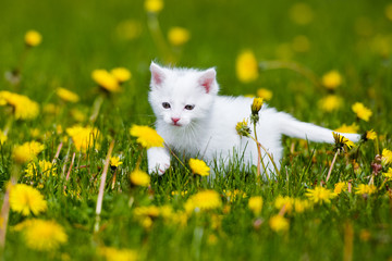 adorable white kitten outdoors