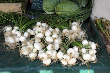 frische weiße zwiebeln