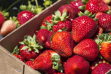 Fresh Strawberry from farm