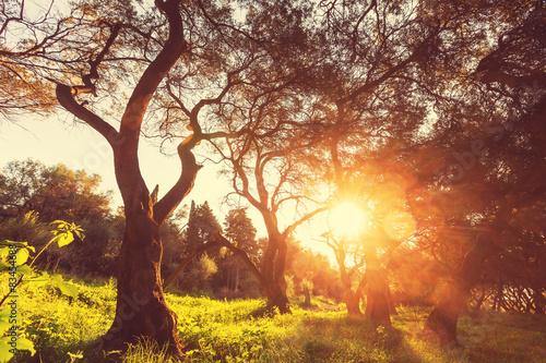 Olive © Galyna Andrushko