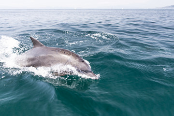 イルカ 水しぶき