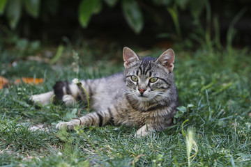 Cat resting in spring grass. Cat in the grass.