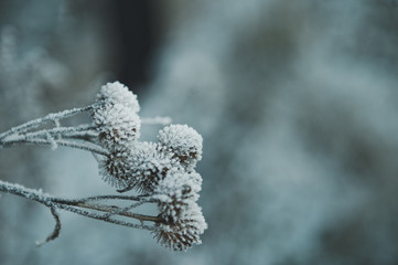 Plants after a frost 2777.