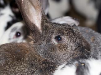 rabbit on the farm