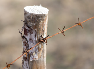 barbed wire on nature