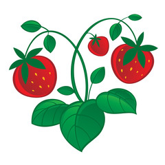 Illustration of fresh and juicy red strawberry