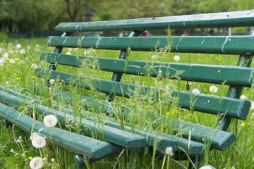 Green sitting bank in park