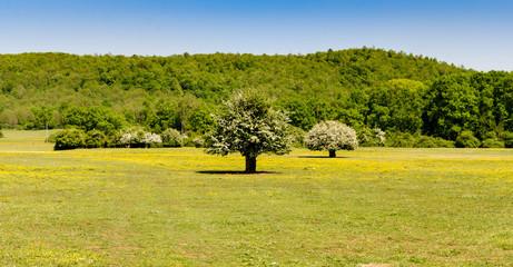 verdi alberi in una colorata campagna con un cielo azzurro
