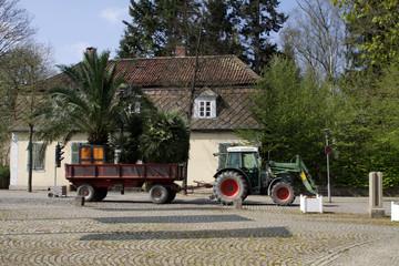Palmentransport aus dem Winterquartier in den Kurpark Bad Pyrmon