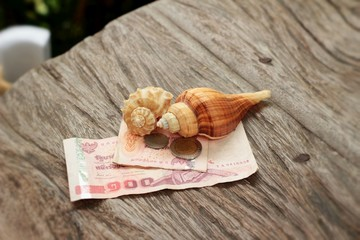 Shell banknotes and coins on the background of wood.