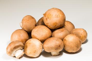 Closeup of fresh mushroom