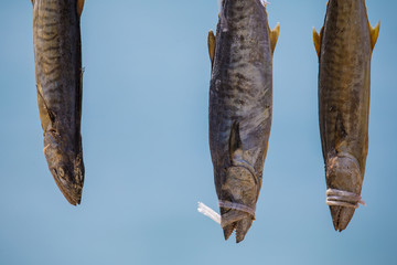 Salted fish with blue background
