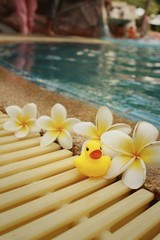 Yellow rubber duck with pluemeria flowers at swimming pool.