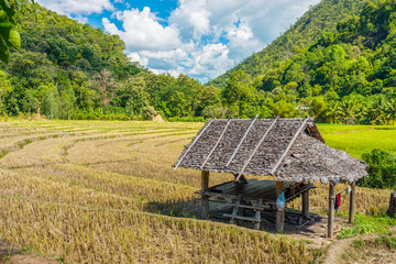 Landscape view of wooden hut in paddy field with mountain