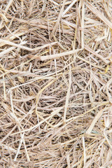 dry grass or hay texture