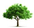 Obrazy na płótnie, fototapety, zdjęcia, fotoobrazy drukowane : tree isolated