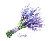 Vector watercolor bouquet of lavender.