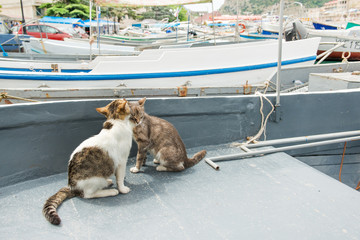 Cats on a fishing boat at Balaklava quay, Crimea