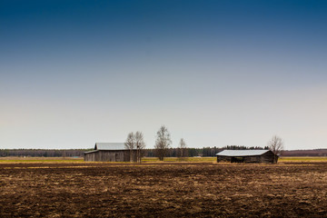 Barn Houses And Birch Trees