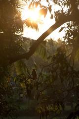 Monkey and sunset