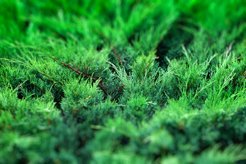 Greenery Background