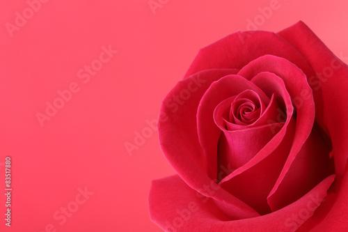 czerwony-kwiat-rozy-z-pieknymi-platkami-ksztalt-serca