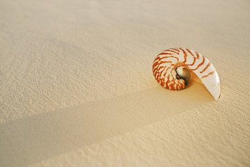 nautilus sea shell on golden sand beach in  soft sunset light