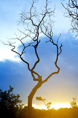 Silhouette of trees in the park on sunset