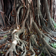 View of roots