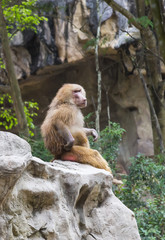 monkeys in the wild filmed close up