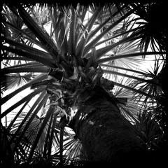 United Arab Emirates, Abu Dhabi, Palm trees
