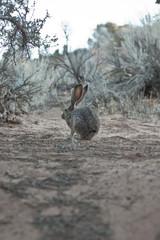 Rabbit in wilderness