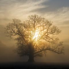 Sunlight through tree branches