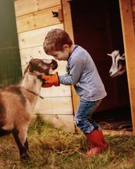 Boy (2-3) with goat near barn