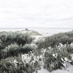 South Africa, Western Cape, Overberg District Municipality, Hermanus, Beach vegetation